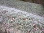 De fortes gel�es en Alsace.