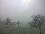 Brouillard givrant.