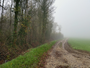Brouillard � la campagne