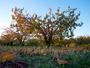 Lumi�re sur les arbres fruitiers