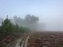 Brouillards : pourquoi sont-ils si fréquents en automne ?