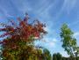 Ciel �cheveul�  et couleurs d'automne