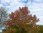 Des �claircies dans le ciel d'automne