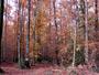 For�t de berc� aux tons d'automne - 1