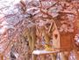 La neige arrive � Courchevel-Village..., les m�sanges aussi !