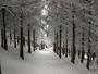 Neige 24 janvier 2015 (50cm, 1200m)
