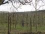 Hiver et tailles des arbres