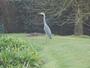 Un visiteur dans le jardin...