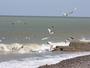 Grandes mar�es d'avril 2015