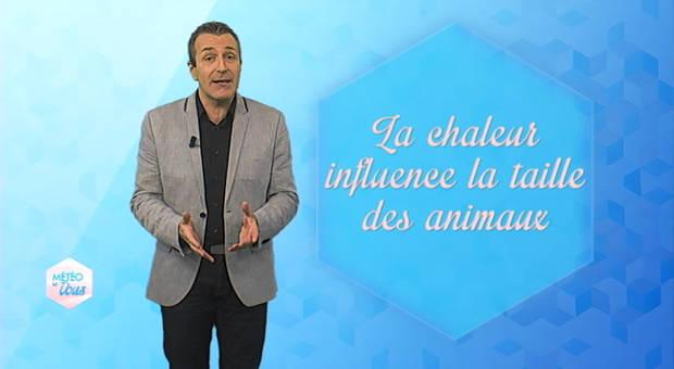 Vidéo Chaleur & taille des animaux : l'influence du climat