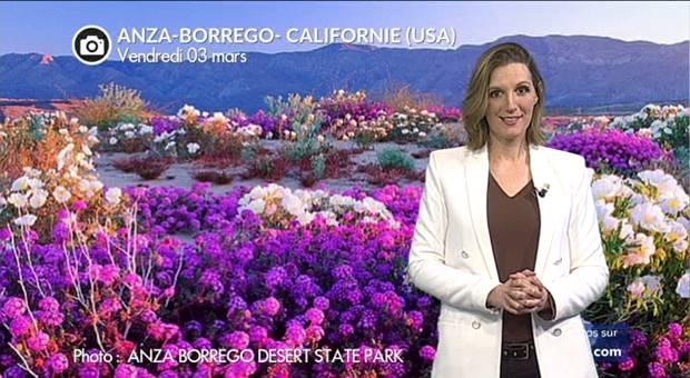 Vidéo Super-floraison dans le désert de Californie