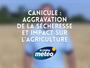 Canicule : aggravation de la sécheresse et conséquences sur l'agriculture