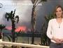Incendies en Californie : 70 000 hectares brûlés